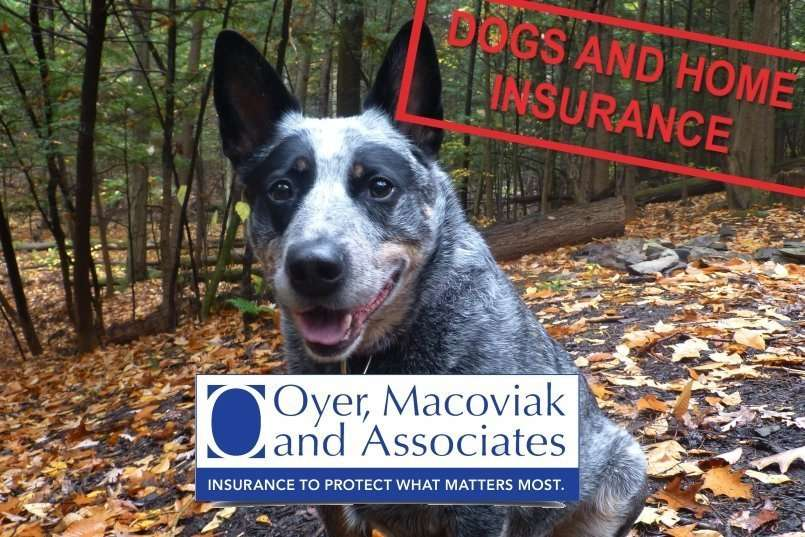 Dogs and Home Insurance