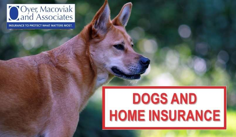 Dogs Homeowners Insurance