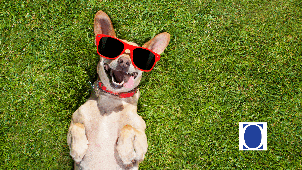 Do You Have Animal Liability Insurance Coverage?